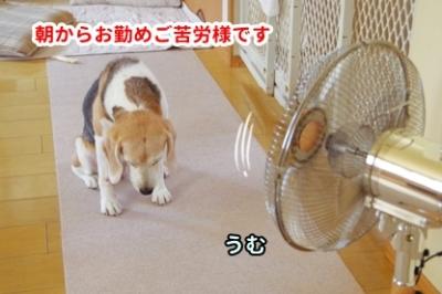 朝から暑いぜ