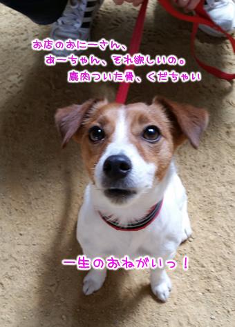 20150328_130152.jpg