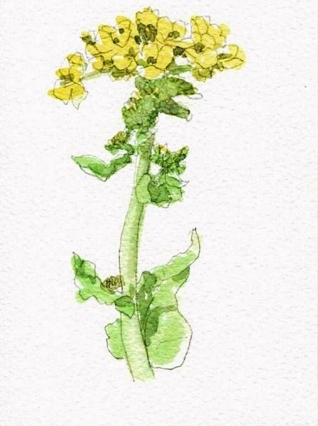 菜の花4 (447x600)