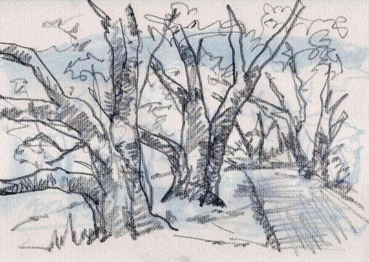 背割堤の桜 (750x532)