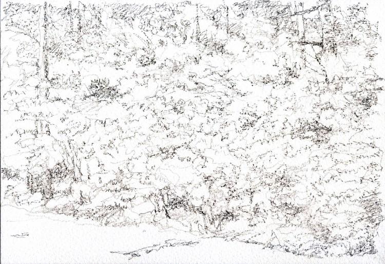 つつじ2 デッサン (750x514)
