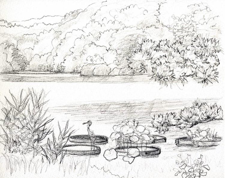山田池 デッサン (750x595)