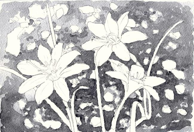 花 グリサイユ (650x442)