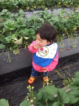 IMG_4044苺