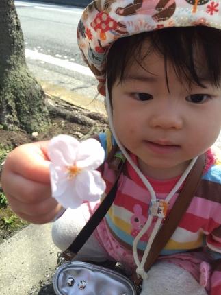 IMG_4326桜