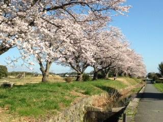 桜2015.2