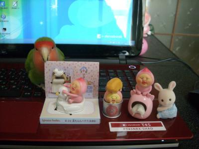 DSCN9509_convert_20150211094539.jpg