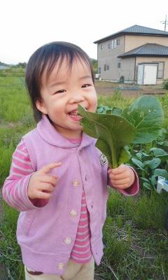 0510小松菜to