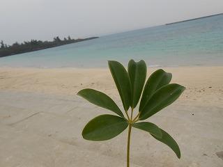 s-2015沖縄 118