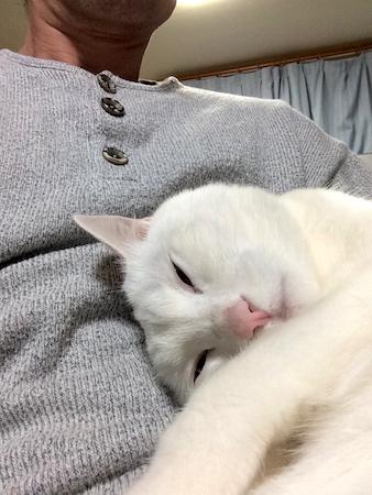 シロの寝顔