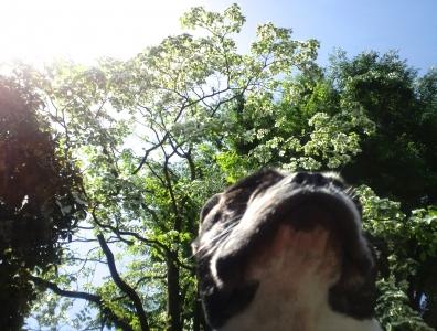 dogwood1.jpg