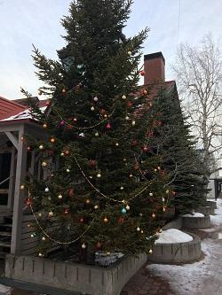 クリスマスツリー昼間