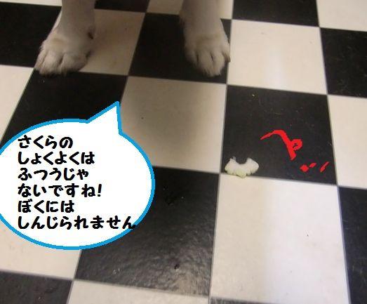 CIMG3930.jpg
