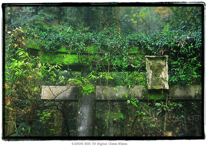 大仁金山山神社の廃鳥居1412oohito134.jpg