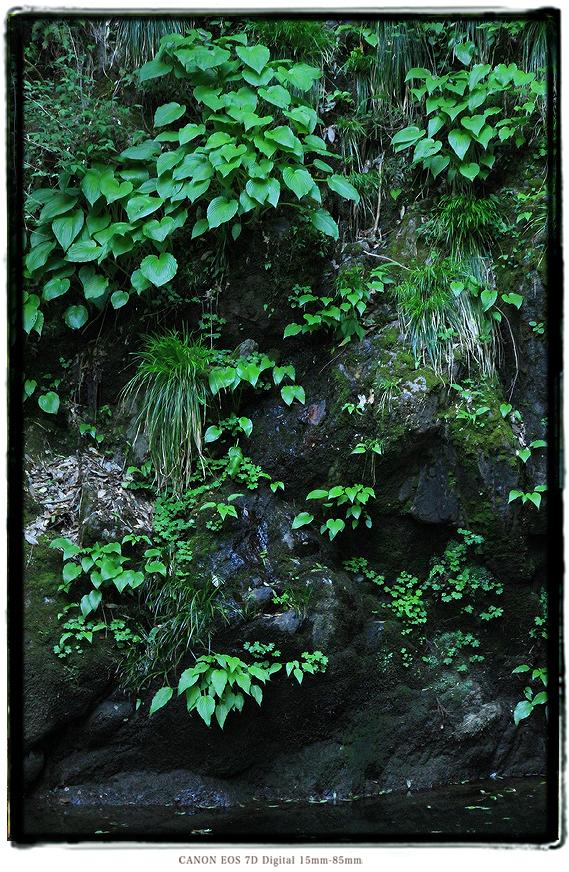 京都府福知山市天岩戸神社1505GW0704.jpg