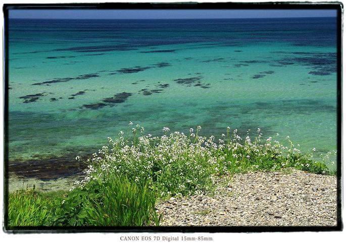油谷島1505gw0113.jpg