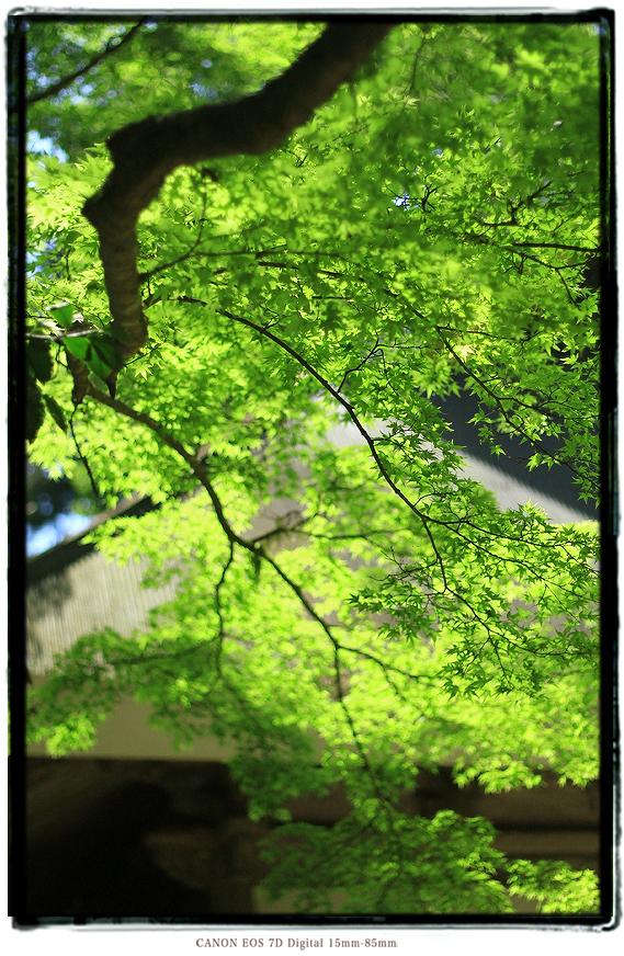 兵庫県丹波市高源寺1505gw0422.jpg