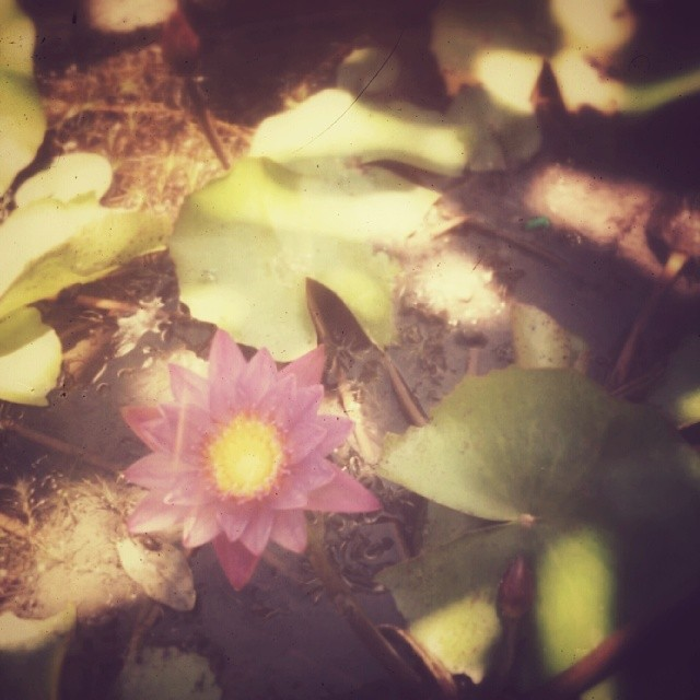 _lotusya__2014-04-26_14-12-12.jpg