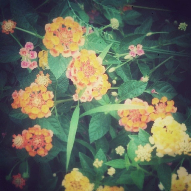 _lotusya__2014-05-04_15-33-40.jpg