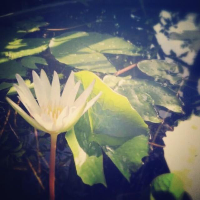 _lotusya__2014-05-29_15-42-34.jpg