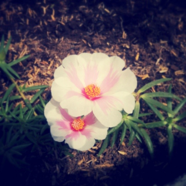 _lotusya__2014-06-05_16-40-26.jpg
