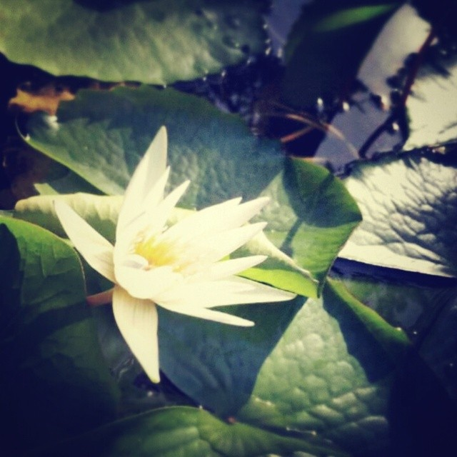 _lotusya__2014-06-14_15-53-33.jpg