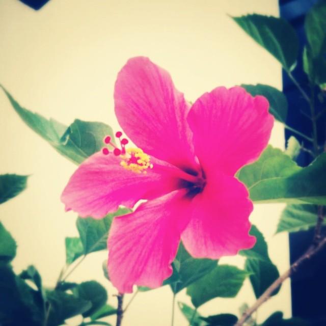 _lotusya__2014-06-16_15-04-47.jpg