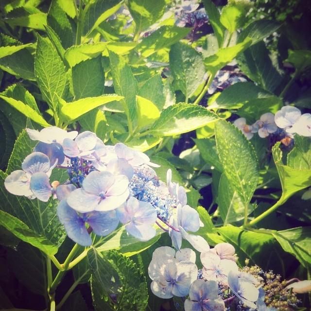 _lotusya__2014-07-01_14-31-35.jpg