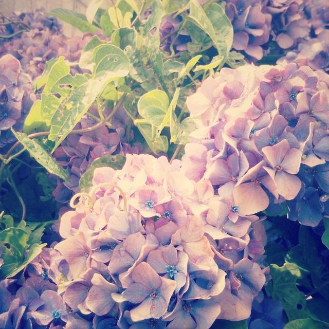 _lotusya__2014-07-01_14-35-39.jpg