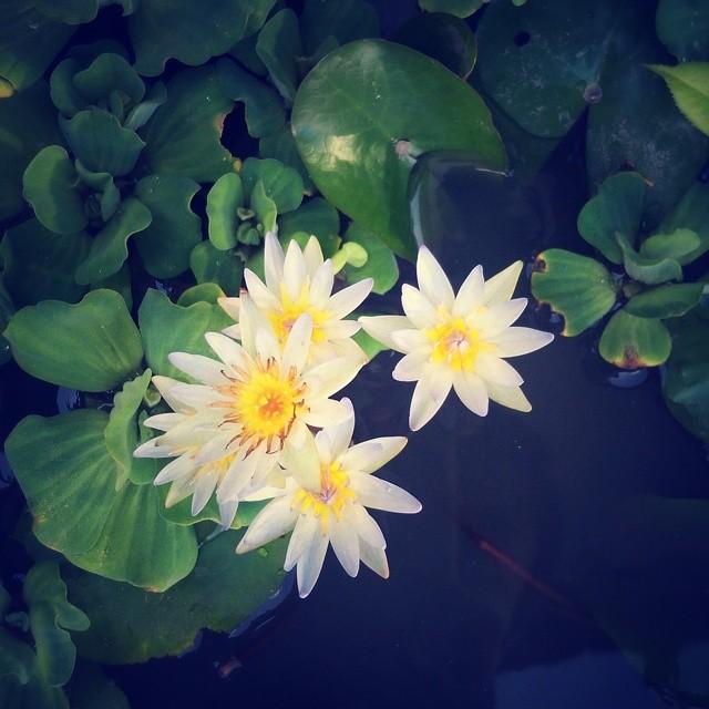 _lotusya__2014-08-12_15-18-40.jpg