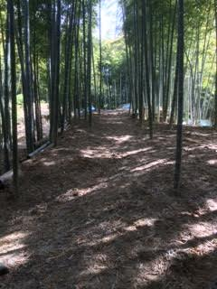 竹藪150417
