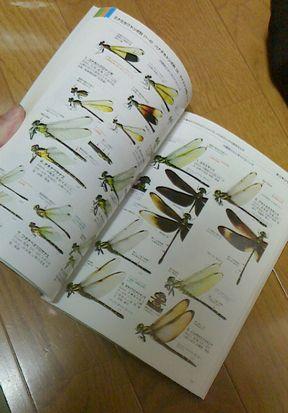 昆虫の図鑑-中身