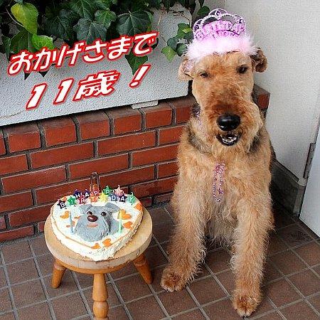 01_50607ルナ誕生日-450
