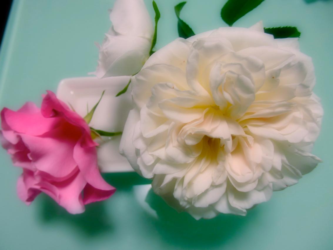 室内の薔薇