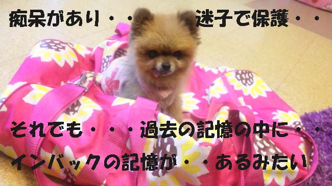 120810_183507-1.jpg