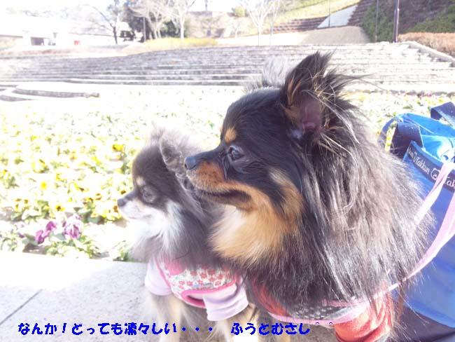 150110_104858-1.jpg