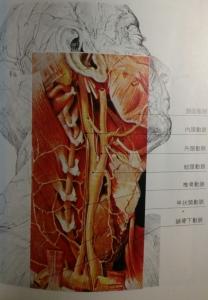 頸動脈 椎骨動脈