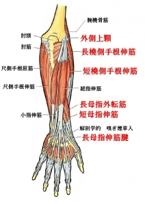 腱鞘炎筋群