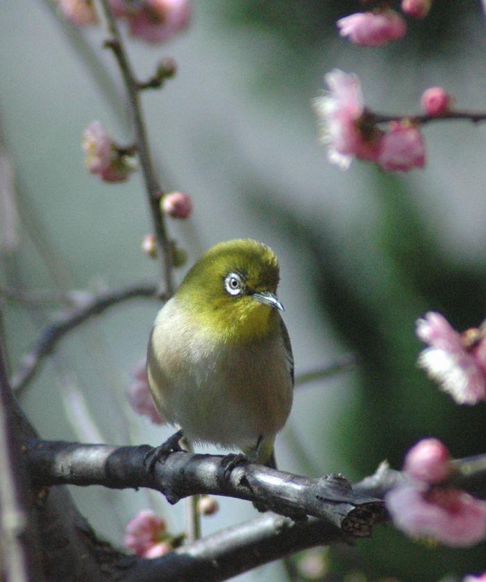 鳥 022