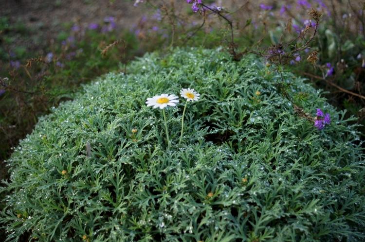 身近な花たち 056 (750x498)