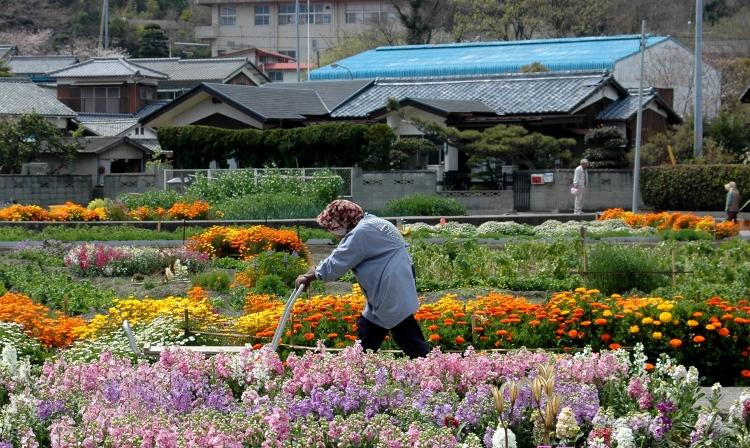 花畑を行く (750x448)