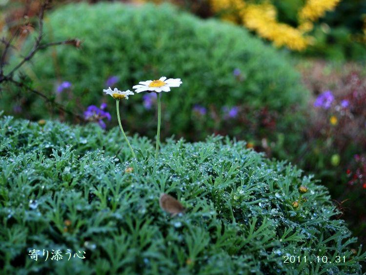 コピー ~ 身近な花たち 057 - コピー (750x564)
