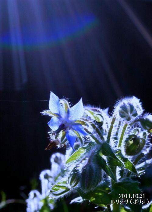 身近な花たちN 029 - コピー (499x750) - コピー