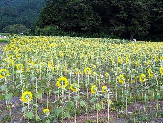 himawari-20150814-15s.jpg
