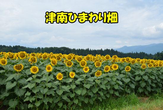DSC_0082_20150821144812a08.jpg
