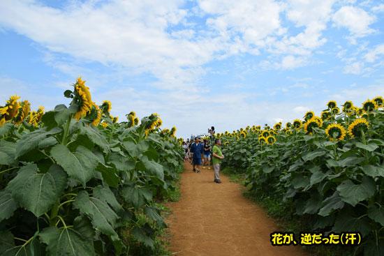 DSC_0096_20150820222845bf5.jpg