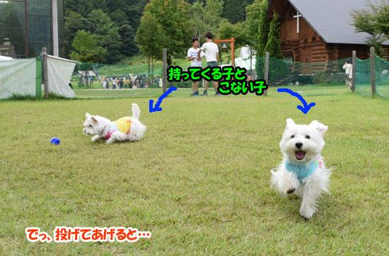 DSC_0177_20150825161219135.jpg