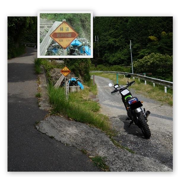 daikokuba-ga-1506-024b.jpg