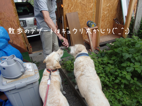 kyuuri_20150811231409f6a.jpg