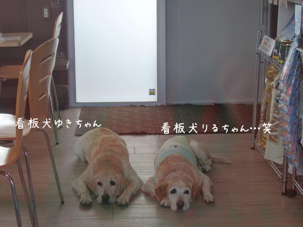 riru_20150815210729744.jpg